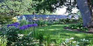 out in the garden nursery specialty plants perennials for shade