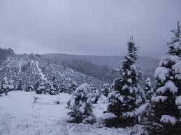 ruff u0027s christmas trees localharvest