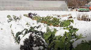 winter growing guide introduction u0026 part 1 scheduling your