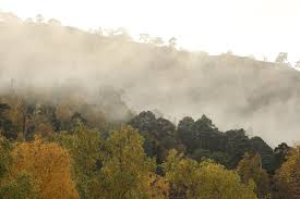 Above The Canopy by Misty Autumn Day In Strathfarrar Alan Watson Featherstone U0027s Blog