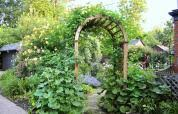cottage style backyards from blah lawn to backyard rose garden paradise this old house