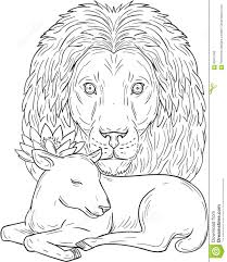 lion watching over sleeping lamb drawing stock vector image