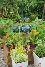 Vegetable Gardening In Pots by Herbs In Containers U0026 Vegetable Garden Plant U0026 Flower Stock