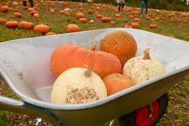 a pumpkin patch doddington of a