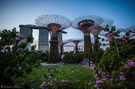 Botanical Gardens In Singapore by 15 Best Places To Take Photos In Singapore On Vacation