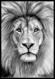 lions of judah tattoo sketch real photo pictures images and