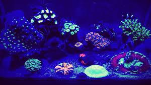 fluval edge marine light fluval edge 46 general discussion nano reef com community