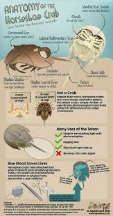 best 25 biologist ideas on pinterest beetles what is bug and