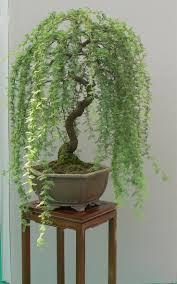 80 best bonsai trees images on pinterest bonsai trees bonsai