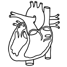 Coloring Pages Hearts Heart Picture In Human Anatomy Coloring Pages Heart Picture In by Coloring Pages Hearts
