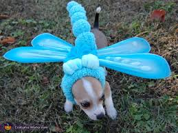 Halloween Costume Ideas For Pets 100 Creative Diy Costume Ideas For Dogs