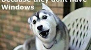 Pun Dog Meme - funny cycling memes bad pun dog bicycle joke meme hilarious