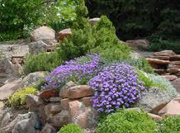 the unique craze of rock gardens u2013 carehomedecor