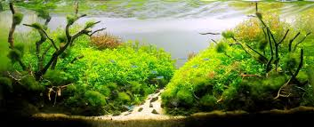 Plants For Aquascaping The Nature Style Planted Tank Aquascape Awards
