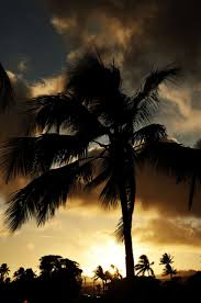 28 best sunsets images on pinterest beach houses sunsets and at