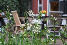 tennessee smart yards native plants browse decks u0026 patios gardenista