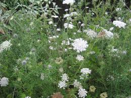 plants native to north america image result for wild north america bushes shrubs and plants