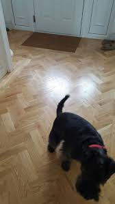 Laminate Wood Flooring And Dogs 58 Best Herringbone And Wood Flooring By Criterion Flooring Images