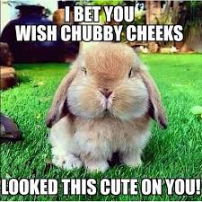 Chubby Meme - 30 most funny rabbit meme pictures and images