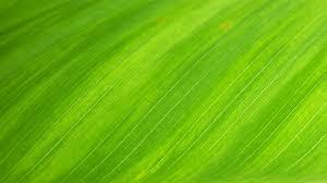 green textile free stock photo