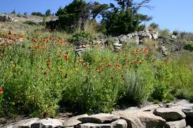 native plant solutions montana native plants