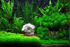 How To Aquascape A Planted Tank Tank