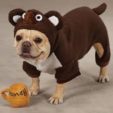 Funny Dog Costumes Halloween 74 Images Dogs Accessories Homemade