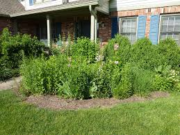 free native plants native plants unlimited rain gardens