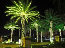 palm tree lights corona backgrounds florida