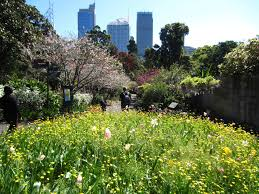 Botanical Garden Sydney by Spring Walk At The Sydney Royal Botanic Garden Sydney