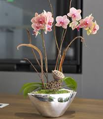 Orchid Plants San Francisco Florist Shop Collections Orchid Plants