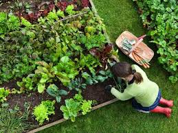 small kitchen garden ideas small vegetable garden ideas how to plan and design them