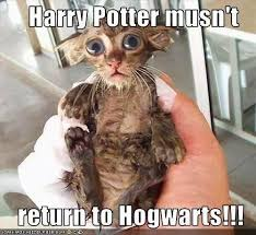 Hairless Cat Meme - entertaining archives page 896 of 956 cat planet cat planet