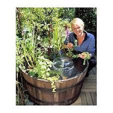 10 best indoor water garden images on pinterest aquatic plants