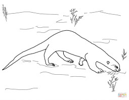 giant otter with noose coloring page animal photos of otters