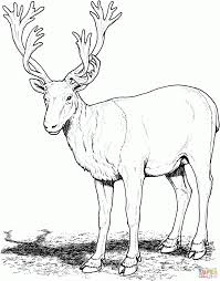 deer pictures to print pages coloring printable sheets animal kids