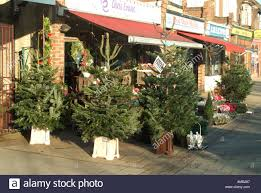 christmas trees for sale in essex place square chiswick london w4