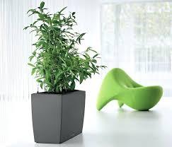 good inside plants good indoor plants 6 house plants that clean your air good indoor