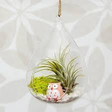 hanging glass water drop air plant terrarium by dingading