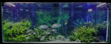 aquarium design exle cichlid planted tank barr report forum aquarium plants