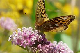 Flowers For Birds And Butterflies - plant right flowers to attract birds bees and butterflies