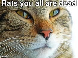 Rat Meme - pokeme meme generator find and create memes