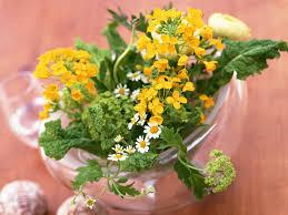 indoor flowering plants indoor flowers the 16 prettiest and most colorful indoor