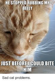 Sad Cat Memes - he stopped rubbing my belly uustbeforeicould bite him