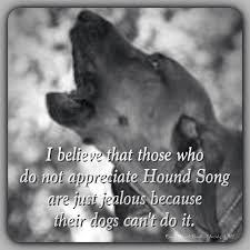 bluetick coonhound in michigan best 25 redbone coonhound ideas on pinterest red bone hunting