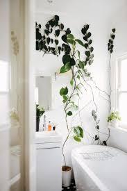 Indoor Vine Plants Homelife Cascading Indoor Plants 4 Beautiful Vines To Drape