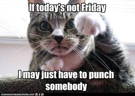 Tgif Meme - lolcats tgif lol at funny cat memes funny cat pictures with