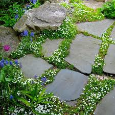10 best ground cover images on pinterest ground cover plants