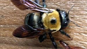 killer bees destroy house southern living