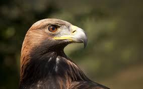 2006 jeep golden eagle golden eagle wallpapers lyhyxx com